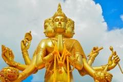 Zeul indian Brahma